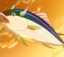 Marbled Tuna