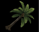 DW6E Palm Tree.png