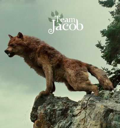 File team jacob fire and ice the wolf pack 20286792 405 432