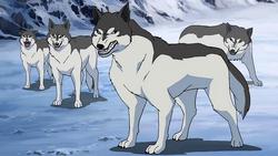 Sistema de Animais 250px-Wolves