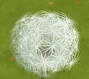 Giant Dandelion Tree
