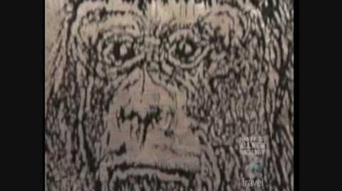 Bigfootville - Oklahoma Bigfoot Footage (Pt. 1 of 5)