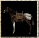 Bay Appaloosa Steppe Horse.jpg