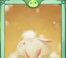 Eclipse Card