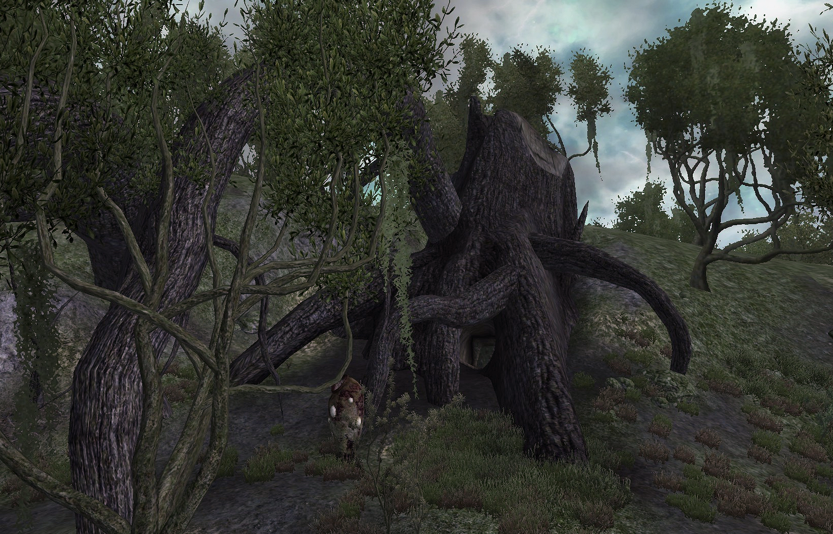 Knotty Bramble - The Elder Scrolls Wiki