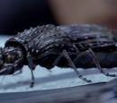 Future Beetle
