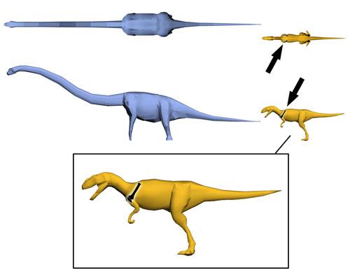 xenotarsosaurus dinosaur coloring pages - photo#26
