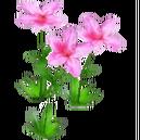 Wildflower Azalea.png