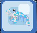 Blue Harlequin Shrimp