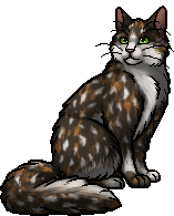 Blossomfall - Warrior Cats Wiki - Erin Hunter, The Blazing ...