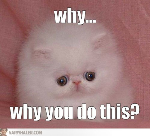 Why-why-you-do-this-lolcats-p9rJzP.jpg