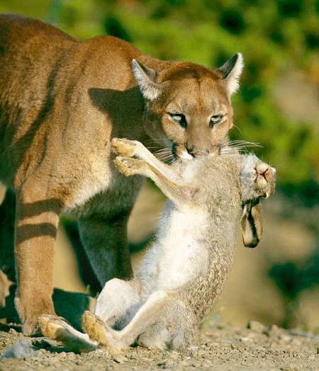 putas en el sur Puma