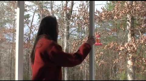 Marble Hornets (Film Project)