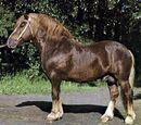 Litewski koń zimnokrwisty