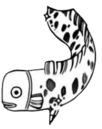 CS Fish Spirit.png