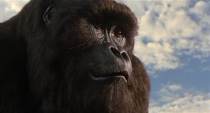 Mighty Joe Young - Gorila Joe (1998) - Film - CineMagia.ro  Mighty Joe Young
