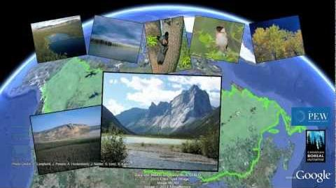 Tour Canada's Boreal Forest Pew