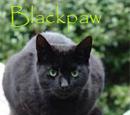 Blackpaw