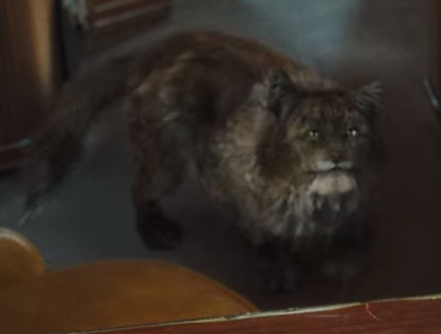 Kitty Cats Vs Dogs