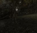 Modyfikacje do Gothic II: Noc Kruka