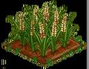 Australian Barley 100.png
