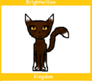 Brightwillow (Up for Adoption)