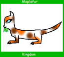Maplefur (Up for Adoption)