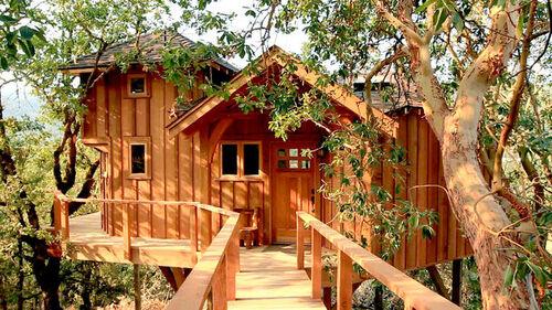 image backyard treehouse masters wiki