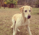 Sandy (Perro)