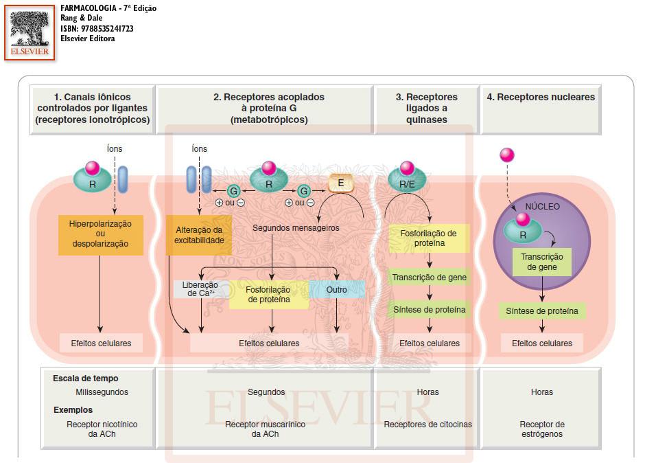 esteroides anabolizantes efectos adversos