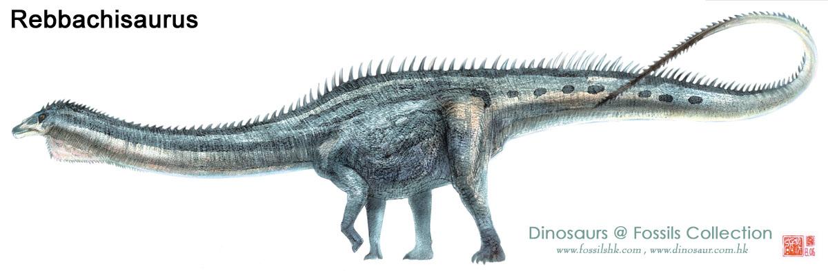 Rebbachisaurus02.jpg