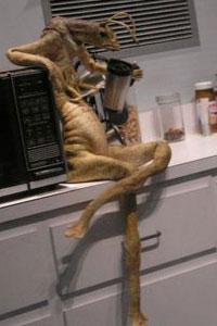 Men In Black Aliens Drinking Coffee Mannix - Men in Black ...