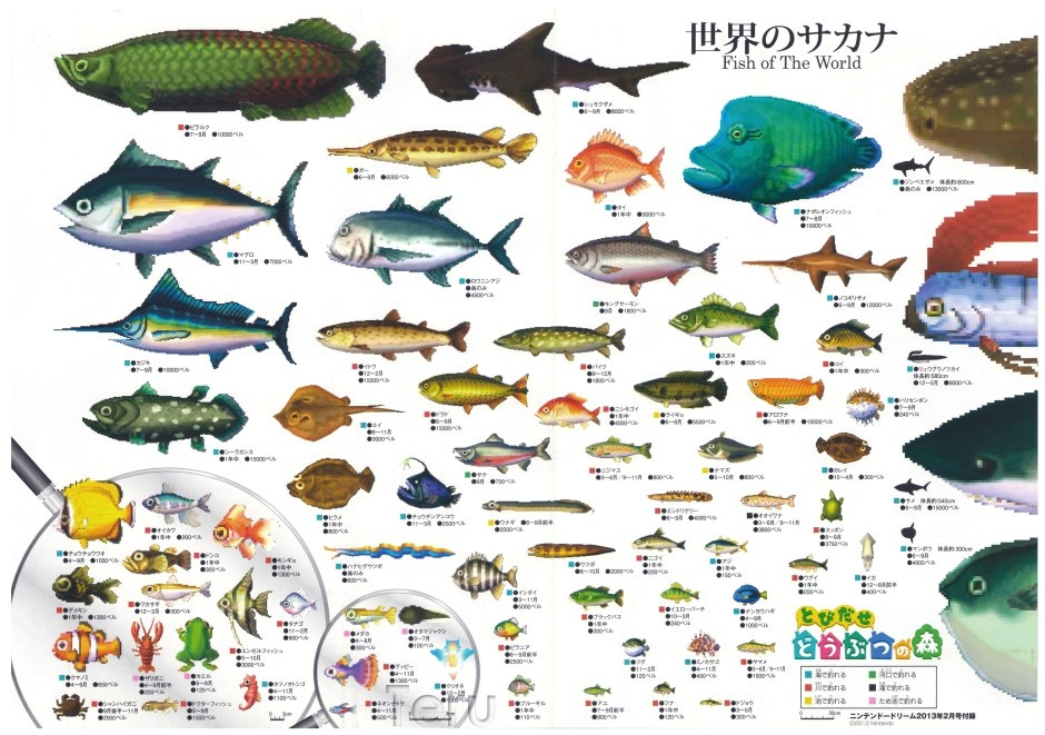 Fish animal crossing wiki for All fish names