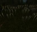 Planta Parasitaria