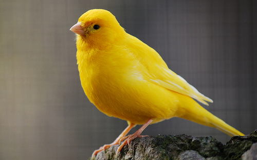 Your Patronus(es) Yellow_Canary