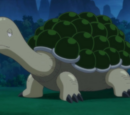 Solar Turtle