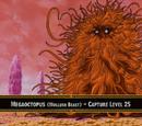 Megaoctopus