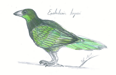 Eoalulavis hoyasi by wbuckland-d3gvbcn
