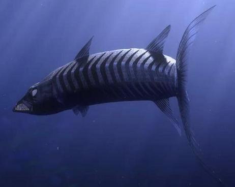 La Barracuda (Finding Nemo) - Disney Wiki