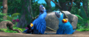 Rio (movie) wallpaper - Blu and Jewel with Rafael's Kid.png