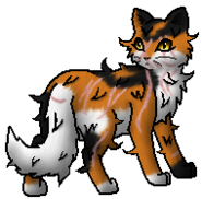 Warrior cats mapleshade and appledusk