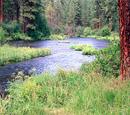 Ruin Woods/River