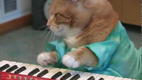 Charlie Schmidt's Keyboard Cat Reincarnated!