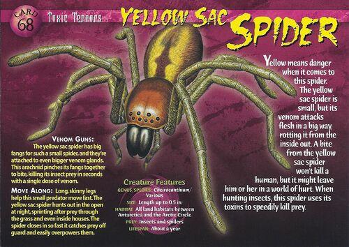 Yellow Sac Spider Wierd N Wild Creatures Wiki