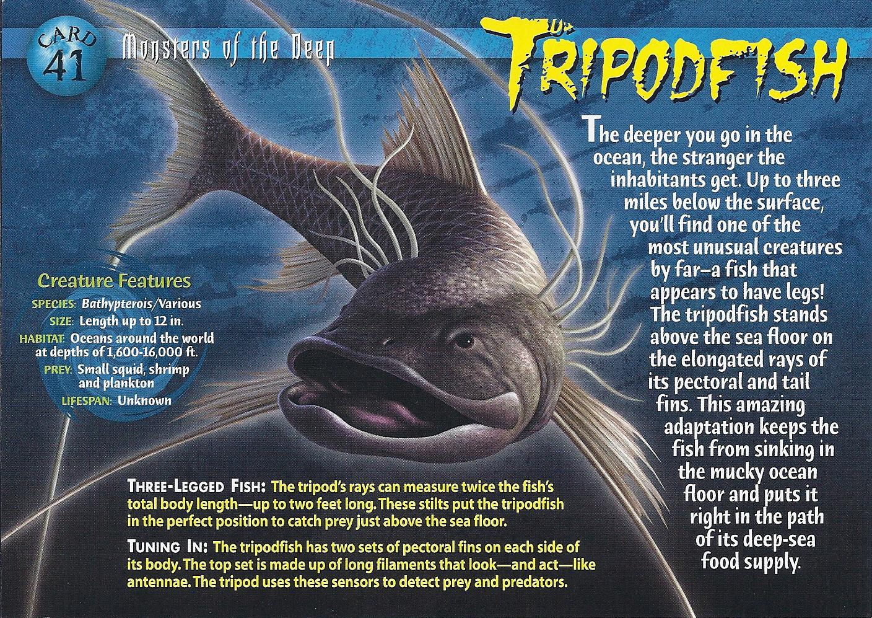 Tripodfish Wierd N Wild Creatures Wiki