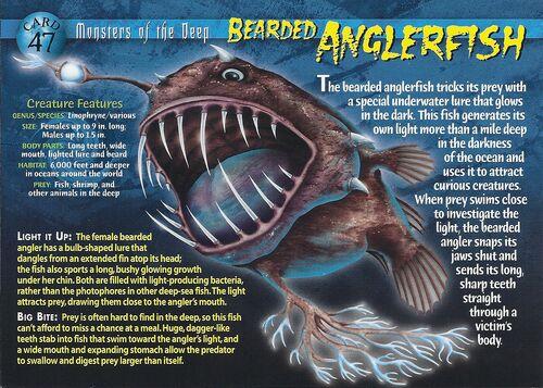 Bearded Anglerfish Wierd N Wild Creatures Wiki Wikia