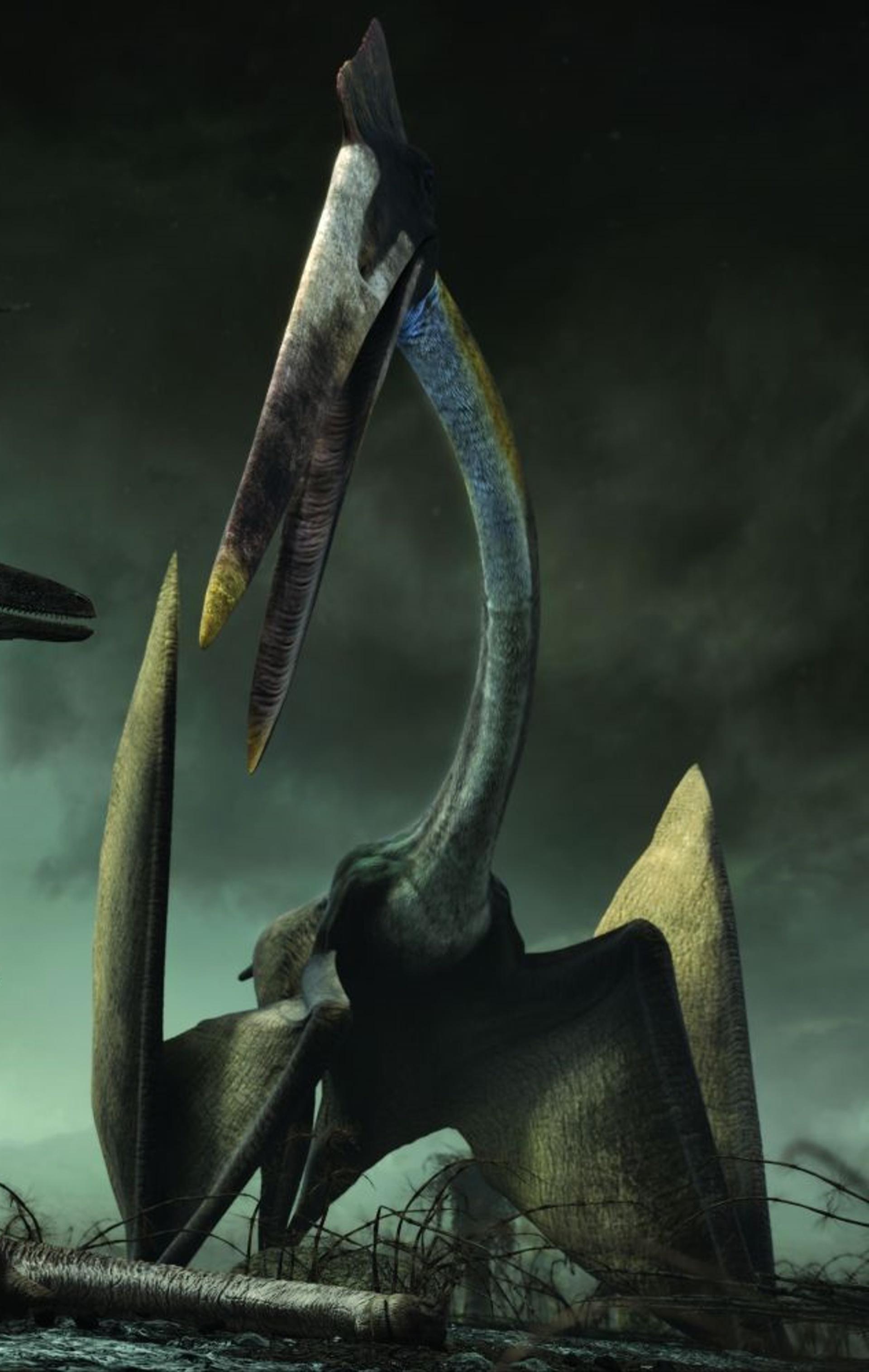 Hatzegopteryx - Planet Dinosaur Wiki
