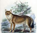 Фолклендская лисица