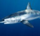 Mega Shark Wiki