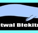 Rysunki poglądowe-Płetwal błękitny